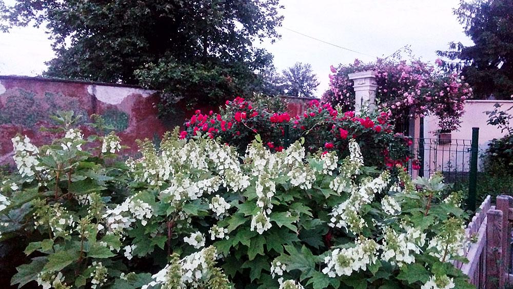 Giardino provato fiorito